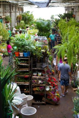 Cadeg - O mercado é famoso por suas bancas de plantas e flores